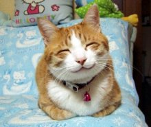 cute-cats-smile-783204
