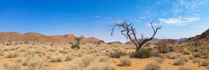 africa arid barren bush